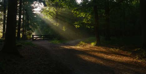 beautiful sunrise in the woods, sunlight on the wild path between the woods