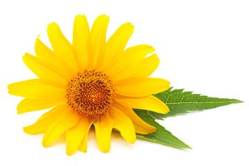 Yellow daisie.