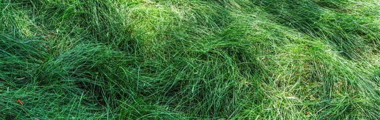 Tall Grass (Banner)