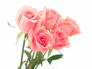 Isolate image of beautiful pink rose flower bouquet on white background. Valentine day, love and wedding concept.