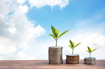 Plant Growing In Savings Coins. Money coin stack growing graph. blue sky background.  Investment Concept.