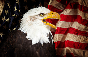 Fototapete - Bald Eagle with American flag.
