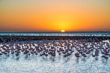 Sunset and Flamingo in Africa