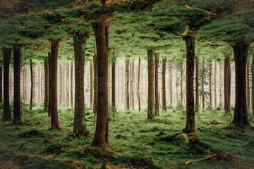 Die Säulen der Erde, der Wald steht Kopf