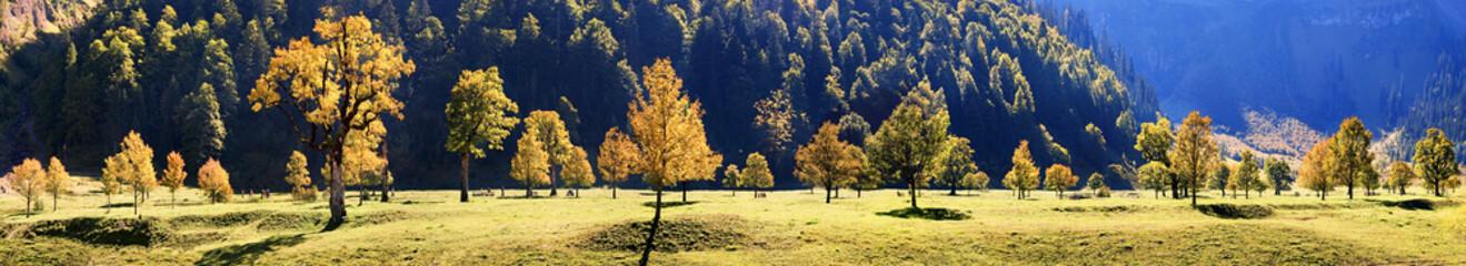 Ahornbäume Panorama im Großen Ahornboden
