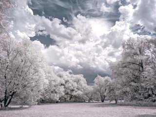Glade in the forest. Infrared photography