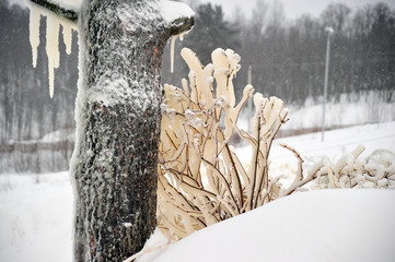 Covered with a large layer of ice tree branches