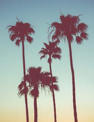 Retro Sunset Palms