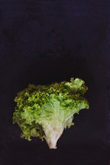 juicy fresh green lettuce leaves on a tempo background, in retro toning