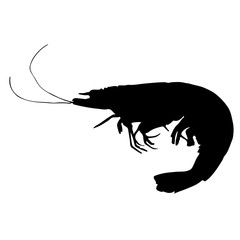 black and white silhouette of shrimp