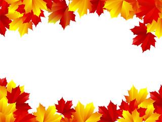 Maple background. Beautiful autumn maple leaves