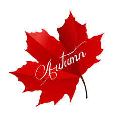 Beautiful maple leaf with the text Autumn on a white background
