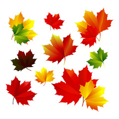 A set of autumn, the bright maple leaves
