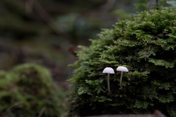 jyukai forest