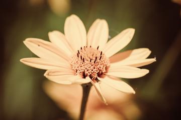 Sunflower/coneflower