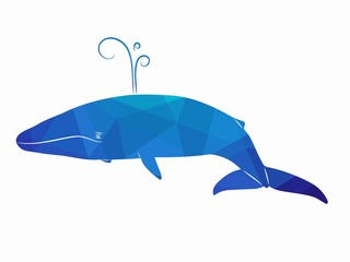 illustration whale, vector draw