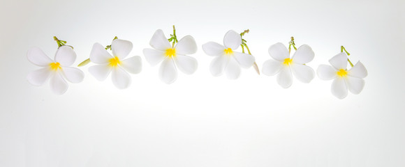 Many blooming white flowers on a white background.