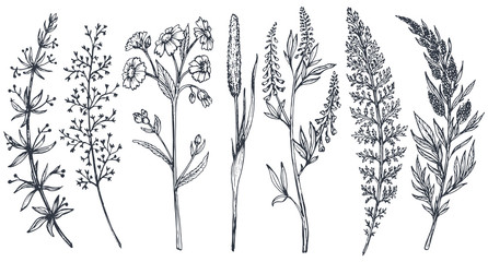 Hand drawn wildflowers and herbs vector set Wall mural