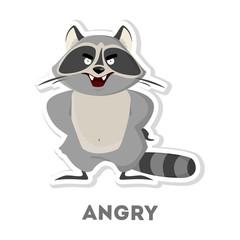 Isolated angry raccoon.