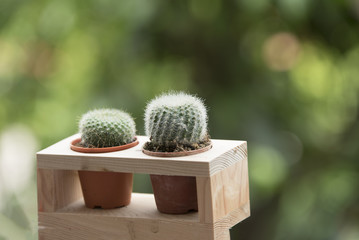 general name for cactus