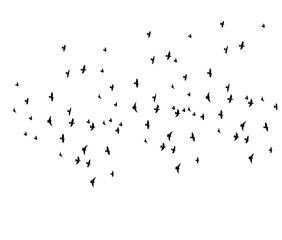 vector, isolated silhouette of flying birds on white background