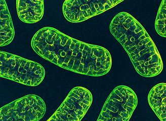 Mitochondria. 3d image