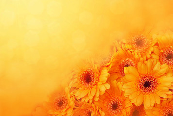 Deurstickers Gerbera Summer/autumn blossoming gerbera flowers on orange background, bright floral card