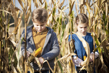 Two children in maize field