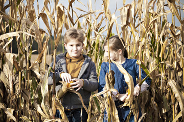 Children standing in maize field