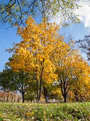 Trees with yellow and green leaves in the park