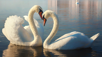 Foto op Aluminium Zwaan Two white swans. This is Love.