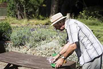 Senior man preparing insect trap, Bournemouth, County Dorset, UK, Europe