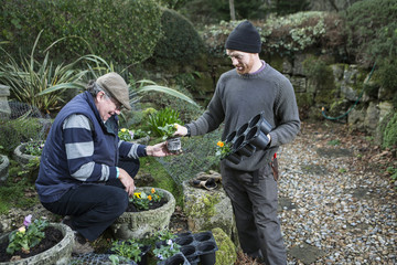Two men planting flowers in garden, Bournemouth, County Dorset, UK, Europe
