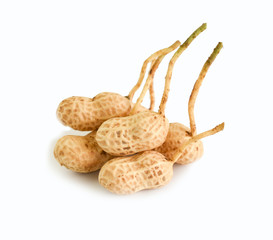 Peanut tree isolated on white background. This has clipping path.