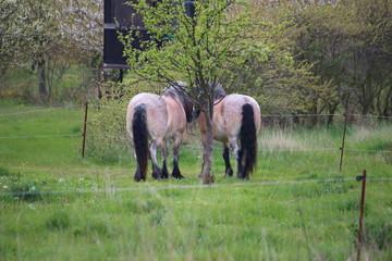 Fotoväggar - zwei Pferde