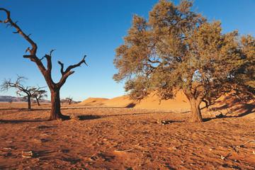 Dead animal in desert