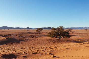 Namibia desert, Veld, Namib