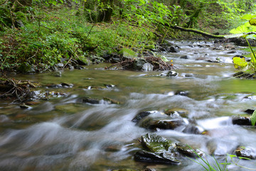 Small stream in mixed forest.