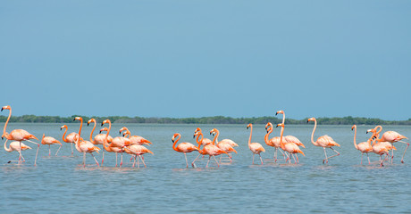 Pink flamingos in lagoon.