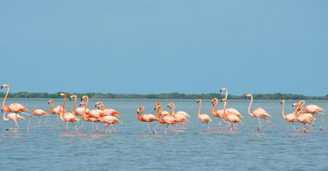 Pink flamingos in lagoon.