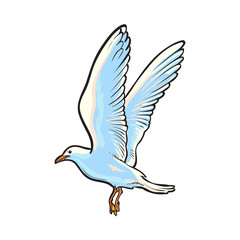 Flying seagull, hand drawn, sketch style side view cartoon vector illustration isolated on white background. Hand drawn cartoon vector illustration of flying seagull
