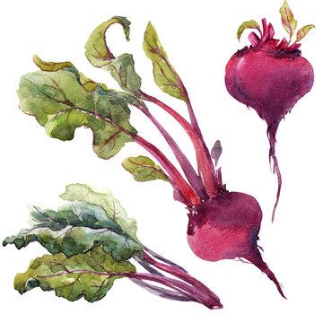 Watercolor beet set