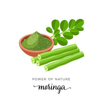 Superfood fruit. Moringa, twig with leaves, powder. Vector illustration cartoon flat icon isolated on white.