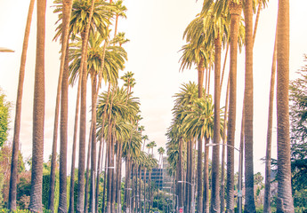Photo sur Aluminium Los Angeles Palm trees in Los angeles