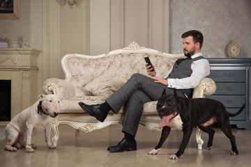 Man with mobile phone seating on the sofa. Dogs: black pit bull or stafforshire terrier, white bull terrier seatting in the legs of man in vintage studio