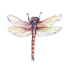 Beautiful insect dragonfly. Watercolor hand drawn painting illustration, isolated on white background.