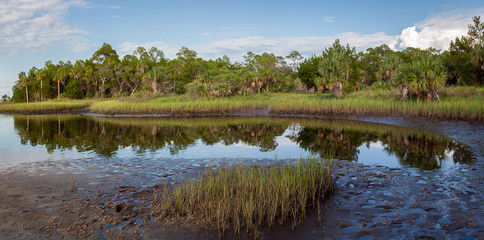 Panoramic view of the marshes on Florida's Gulf Coast with fiddler crabs