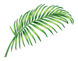 Watercolor painting coconut, palm leaf,green leave isolated on white background.Watercolor hand painted illustration tropical exotic leaf for wallpaper vintage Hawaii style pattern.With clipping path