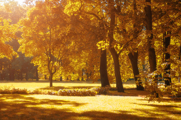 Autumn landscape, autumn park in with golden autumn trees in sunny weather