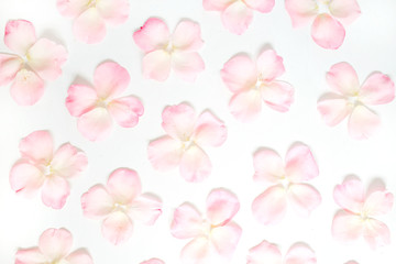 Pink rose petals pattern on white background. Flat lay, top view. Valentine's background. Pattern of flowers.